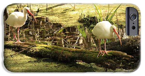 Ibis iPhone Cases - Two Ibises on a Log iPhone Case by Carol Groenen