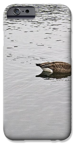Two Lovely Canadian Geese iPhone Case by Douglas Barnett