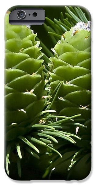 Two Pinecones iPhone Case by Svetlana Sewell