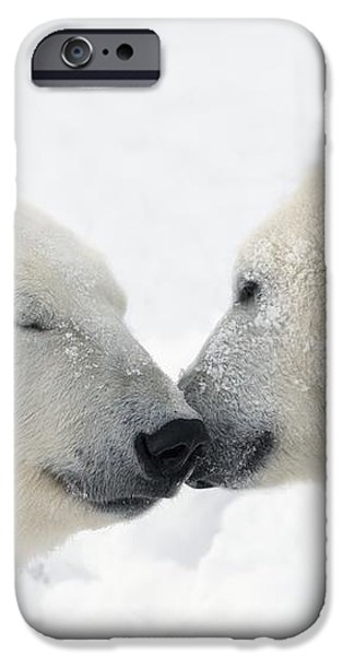 Two Polar Bears Ursus Maritimus iPhone Case by Richard Wear