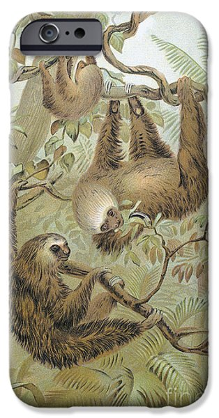 1904 iPhone Cases - Two-toed Sloth iPhone Case by Granger