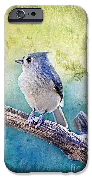 Wild Animals iPhone Cases - Two Tone Titmouse 2 iPhone Case by Debbie Portwood