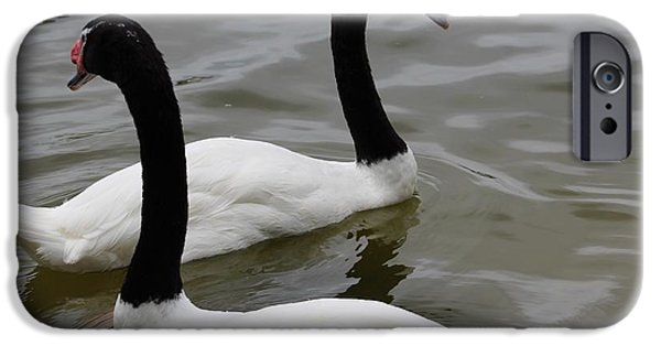 Swans... iPhone Cases - Twos A Pair iPhone Case by Adam Eaton