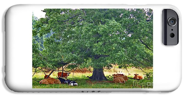 Agriculture iPhone Cases - Under The Tree iPhone Case by Marcel  J Goetz  Sr