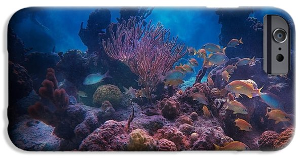 Cutler iPhone Cases - Underwater Paradise iPhone Case by Betsy C  Knapp