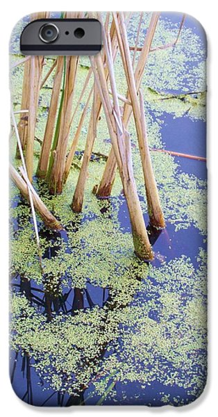 Alga iPhone Cases - Unexpected Beauty iPhone Case by Ruth Koob