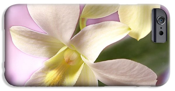 White Orchid iPhone Cases - Unique White Orchid iPhone Case by Mike McGlothlen