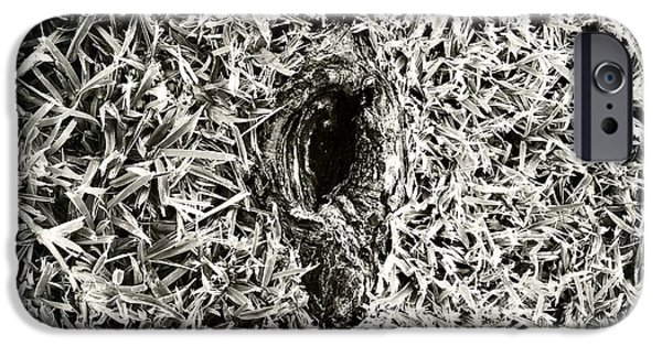 Tree Roots Photographs iPhone Cases - Untitled 20150807 iPhone Case by Marco Oliveira