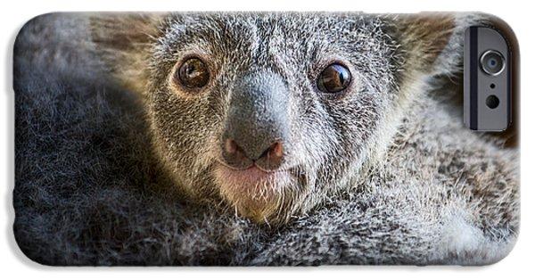 Koala iPhone Cases - Up Close Koala Joey iPhone Case by Jamie Pham