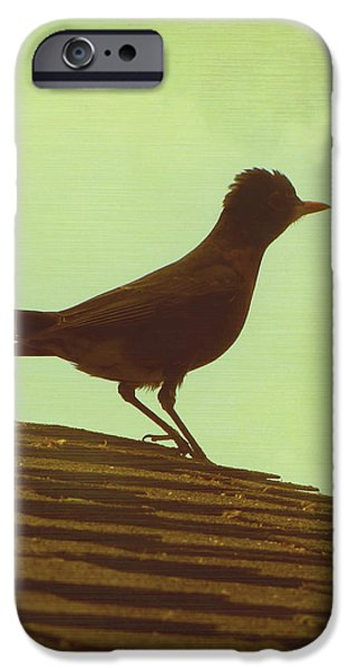 Up on a Roof iPhone Case by Amy Tyler
