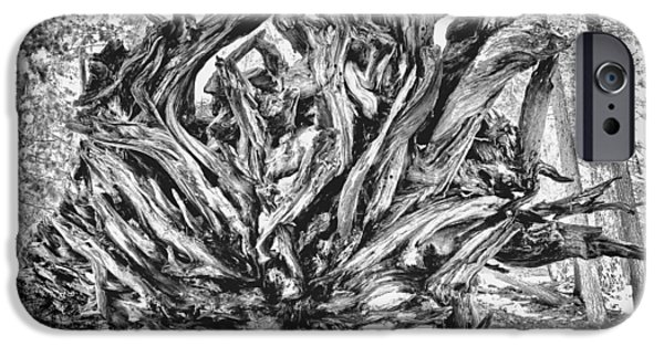 Tree Roots iPhone Cases - Up Rooted iPhone Case by Aron Kearney Fine Art Photography