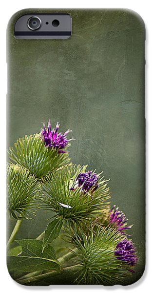 Thistle iPhone Cases - Up to the Point iPhone Case by Evelina Kremsdorf