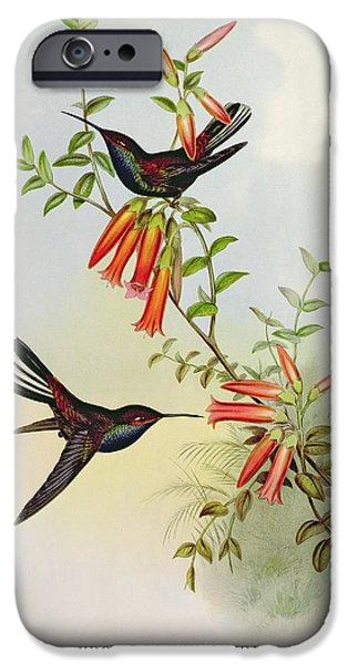Hummingbird iPhone Cases - Urochroa Bougieri iPhone Case by John Gould