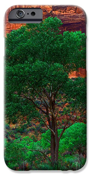 UTAH - COTTONWOOD iPhone Case by Terry Elniski