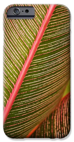Tree Art Print iPhone Cases - Variegated Ti-Leaf 1 iPhone Case by Ron Dahlquist - Printscapes