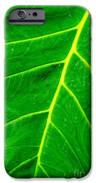 Elephants iPhone Cases - Veins of Green iPhone Case by Gary Richards