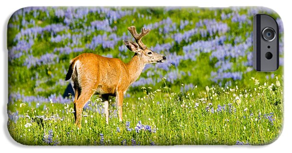 Harts iPhone Cases - Velvet on Lupine iPhone Case by Mike  Dawson
