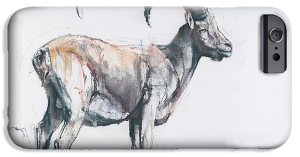 Mammals Drawings iPhone Cases - Venerando Stambecco iPhone Case by Mark Adlington