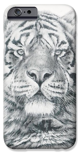 Animal Drawings iPhone Cases - Venturer iPhone Case by Barbara Keith