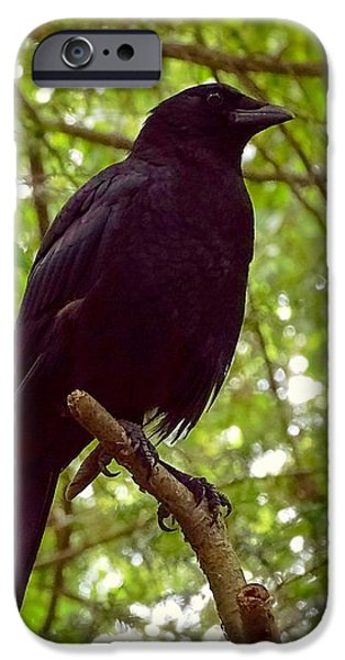 Crows iPhone Cases - Very large crow in the woods iPhone Case by Lilia D