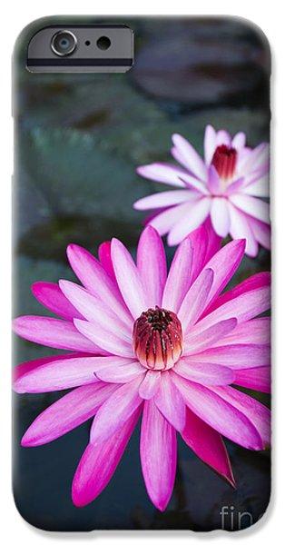 Vibrant Waterlilies iPhone Case by Dana Edmunds - Printscapes