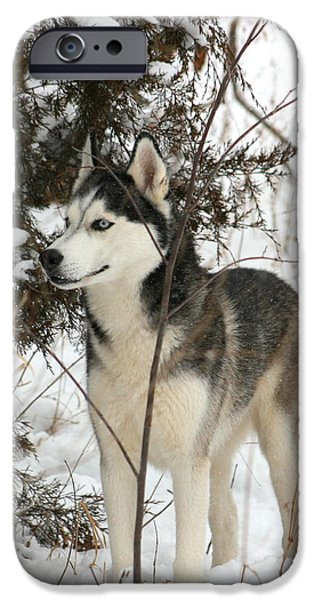 Best Sellers -  - Husky iPhone Cases - Vigilant iPhone Case by David Dunham