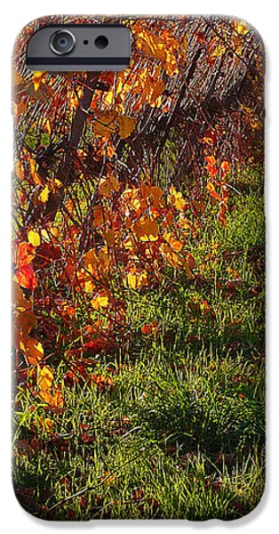Vineyard 13 iPhone Case by Xueling Zou