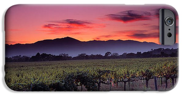 Viticulture iPhone Cases - Vineyard At Sunset, Napa Valley iPhone Case by Panoramic Images