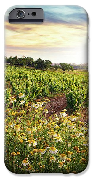 Vineyard iPhone Case by Carlos Caetano
