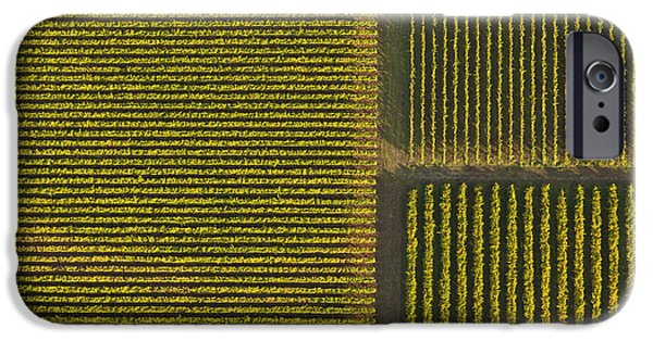 Grapevines iPhone Cases - Vineyard from Above iPhone Case by Diane Diederich
