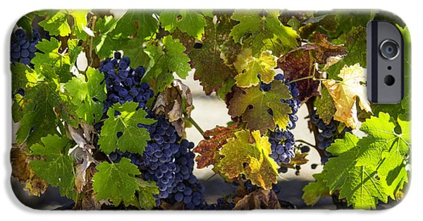 Viticulture iPhone Cases - Vineyard Grapes iPhone Case by Garry Gay