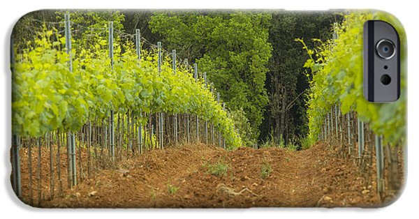 Agricultural iPhone Cases - Vineyard in Tuscany iPhone Case by Patricia Hofmeester