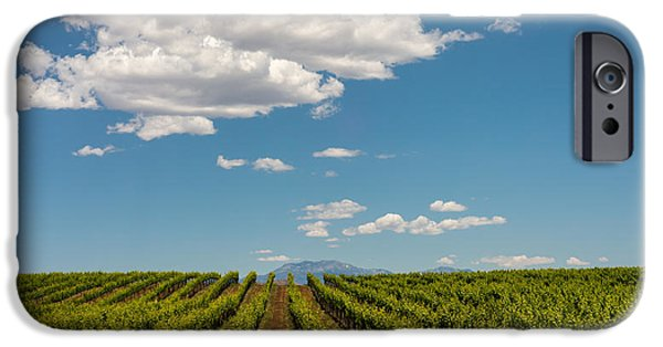 Temecula iPhone Cases - Vineyard iPhone Case by Joseph Smith