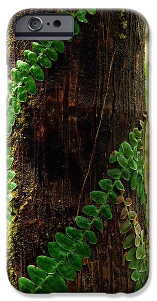 Vining Fern on Sierra Palm Tree iPhone Case by Thomas R Fletcher