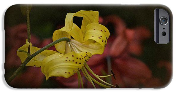 Asiatic Lily iPhone Cases - Vintage Asiatic Lily iPhone Case by Richard Cummings