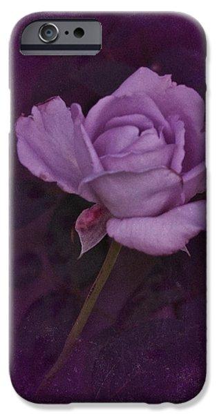 Flora iPhone Cases - Vintage August Purple Rose iPhone Case by Richard Cummings