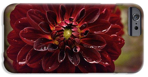 Flora iPhone Cases - Vintage Burgundy Dahlia iPhone Case by Richard Cummings