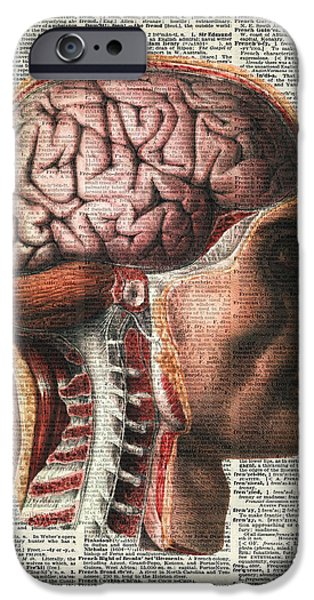 Book Pastels iPhone Cases - Vintage Human Brain Anatomy iPhone Case by Jacob Kuch