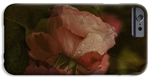 Garden Tapestries - Textiles iPhone Cases - Vintage Rose with Droplets iPhone Case by Richard Cummings