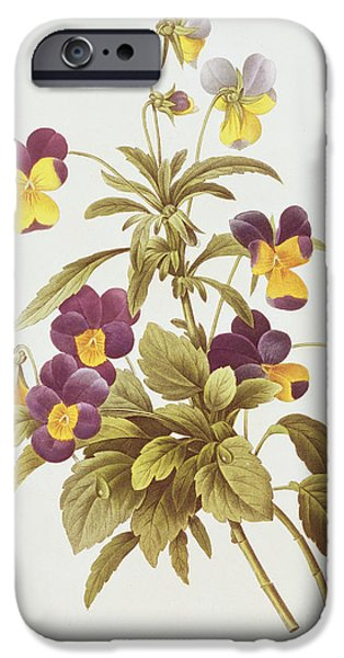 Stems Drawings iPhone Cases - Viola Tricolour  iPhone Case by Pierre Joseph Redoute
