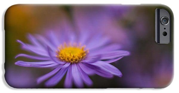 Floral Photographs iPhone Cases - Violet Daisy Dreams iPhone Case by Mike Reid