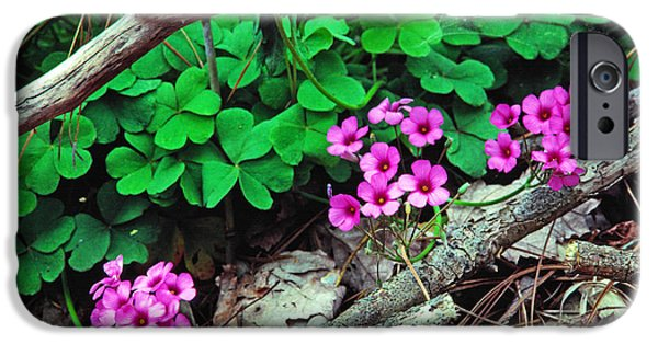 States iPhone Cases - Violet Wood Sorrel iPhone Case by Thomas R Fletcher