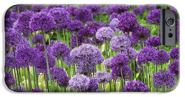Allium Hollandicum iPhone Cases - Visions in Purple iPhone Case by Tim Gainey