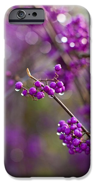 Berry iPhone Cases - Vivid Beauty Berries iPhone Case by Mike Reid