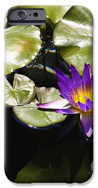 Vivid Purple Water Lilly iPhone Case by Teresa Mucha