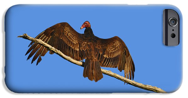 Eastern Wild Turkey iPhone Cases - Vivid Vulture .png iPhone Case by Al Powell Photography USA