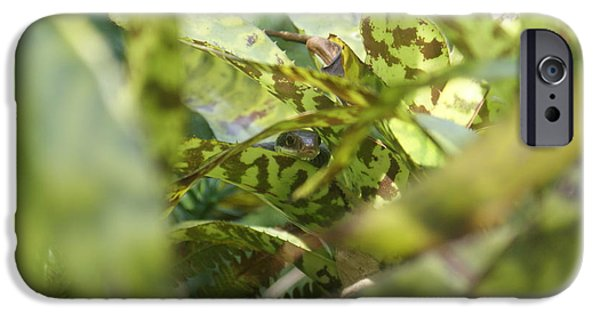 Wild Racers iPhone Cases - Waiting for Eve iPhone Case by Jack Norton