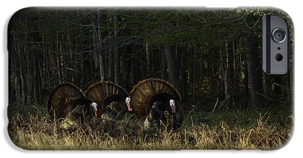 Eastern Wild Turkey iPhone Cases - Waiting In The Wings iPhone Case by TAPS Photography