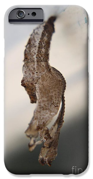 Moth iPhone Cases - Waiting to Fly XI iPhone Case by Mandy Shupp