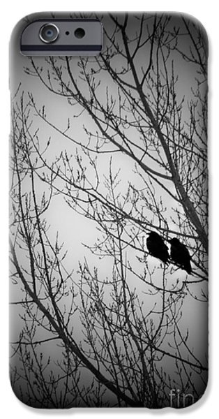 Crows iPhone Cases - Waiting Together iPhone Case by Marjorie Imbeau